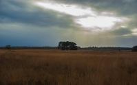 De Regte Heide, Tilburg