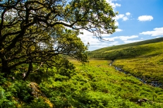 Dartmoor National Park, Wistman's Wood National Nature Reserve