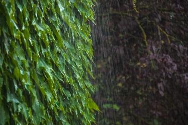 Rain in Tuscany