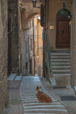 Bommel in Perugia