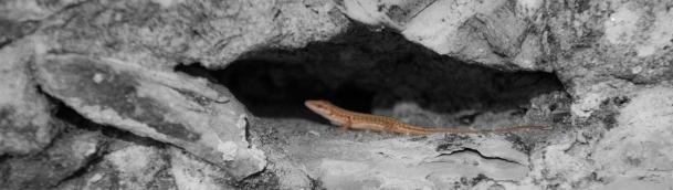 Wildlife in Castiglione del Lago
