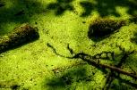 Find the snake - das Insel Rügen