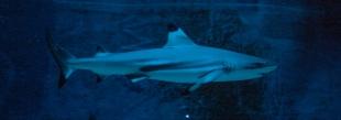 Shark - Leipziger Zoo