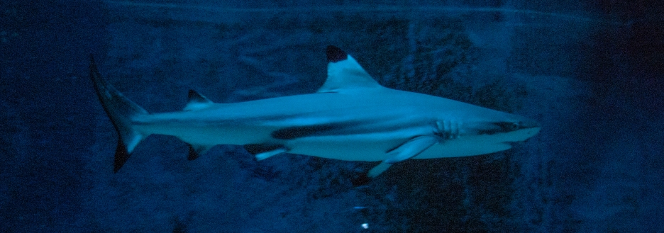 Shark - Leipziger Zoo