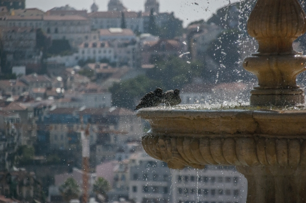 (sun)bathing doves - Lisbon