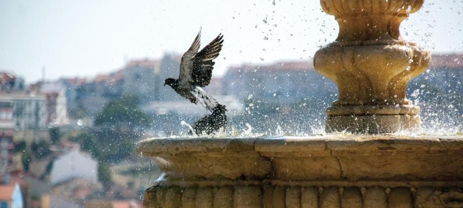 (sun)bathing doves - Lisbon