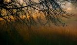 Dawn, De Regte Heide - Tilburg