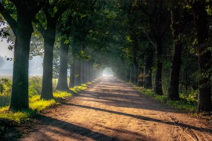 De Regte Heide - Tilburg