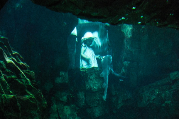 Completely in awe - Lisbon Oceanarium