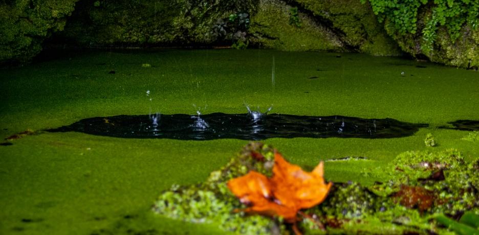 Drops, Quinta da Regaleira - Sintra