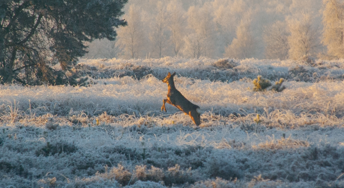 Walking the dog in Winter Wonderland