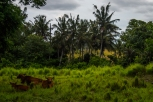Balinese countryside